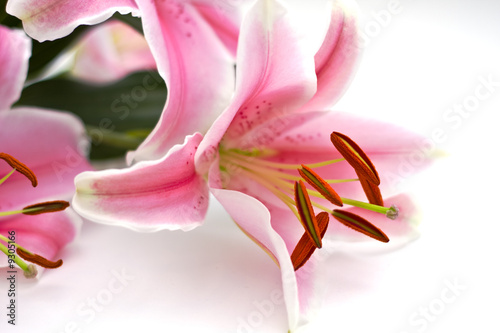 Canvas Print Close Up of pink lillies on white