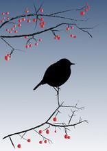 Silhouette Petit Oiseau Sur Br...