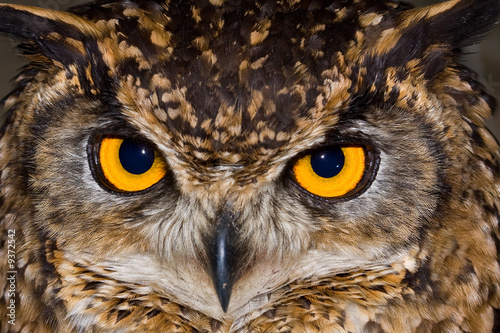 Fotobehang Uil Close-up of a Cape Eagle Owl with large piercing yellow eyes