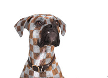 Dog With Flamboyant Checker Pattern