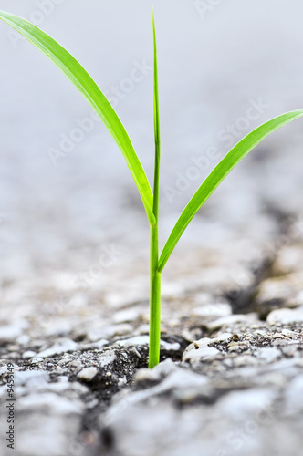 Photo  Green grass growing from crack in old asphalt pavement