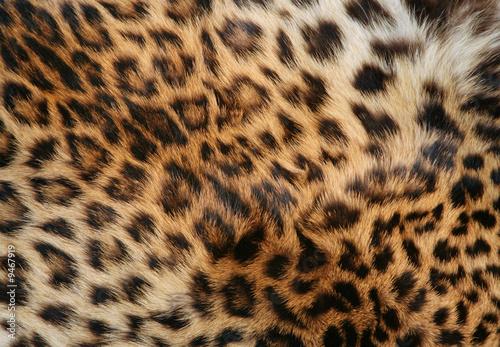 Deurstickers Luipaard skin of the leopard