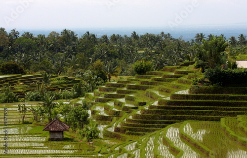 Foto op Aluminium Indonesië Bali 0186