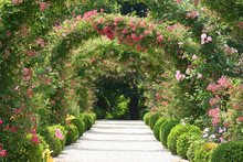 Roses Arch In The Garden