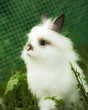 canvas print picture Charming white rabbit in a green grass