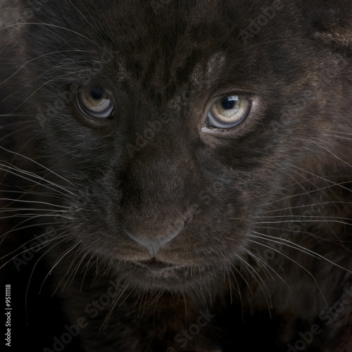 Deurstickers Panter Jaguar cub (2 months) in front of a white background