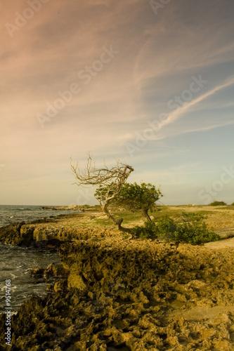 Photo  Aruban Coast