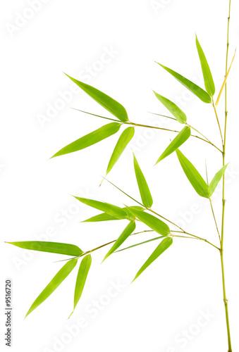 Foto-Schiebegardine ohne Schienensystem - Feuilles de bambou
