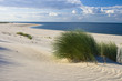 Leinwanddruck Bild - Gras am Strand