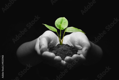 Foto op Canvas Planten plant in hands