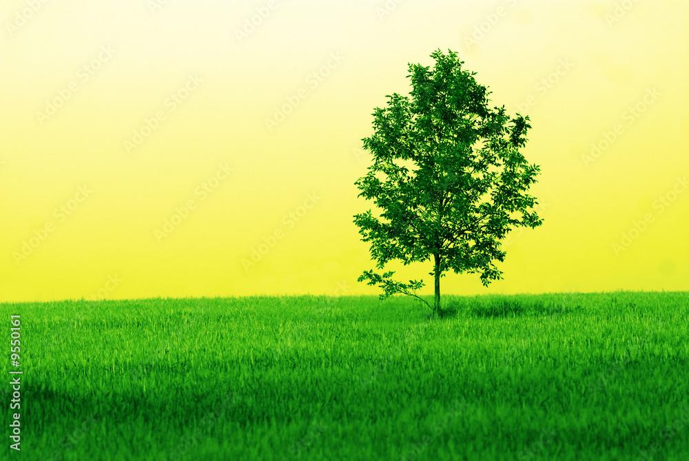 Leinwandbild Motiv - Aphotostudio : lonely tree in  wheaten field