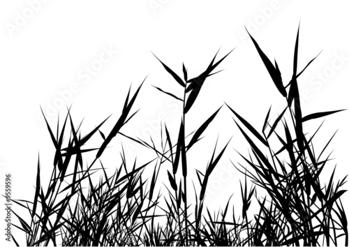 Fototapeta Grass Silhouette 03 - detailed illustration obraz na płótnie