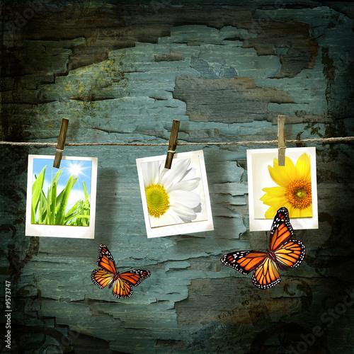Photo sur Toile Papillons dans Grunge Pictures against old crackled backdrop