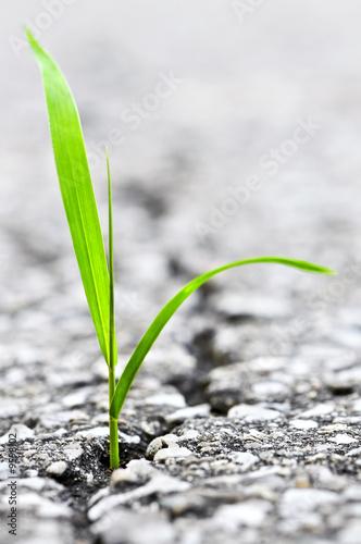 Grünes Gras, das vom Sprung in der alten Asphaltpflasterung wächst Fototapete