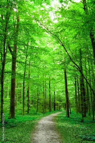 Tuinposter Weg in bos green nature. pathway in the forest