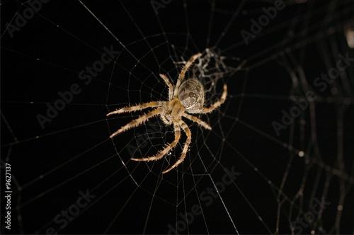 Fotografie, Obraz  Spider on Web 3