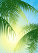 canvas print picture - Sun rays through the tropical leaf, vector illustration