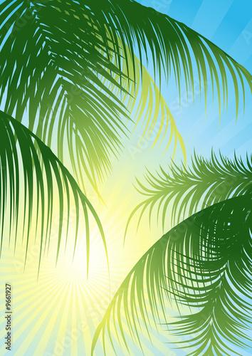 canvas print motiv - Alegria111 : Sun rays through the tropical leaf, vector illustration