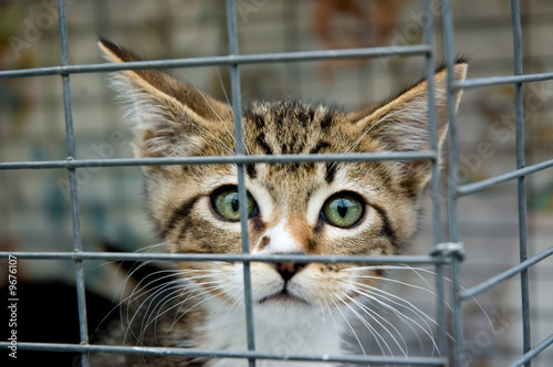 Fotografie, Obraz  A frightened kitten with green eyes staring out from a cage