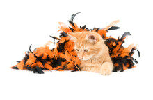 A Yellow Kitten Plays With An Orange And Black Halloween