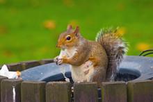 Squirrel Sitting On The Edge O...
