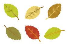 A Set Colorful Autumn Leaves
