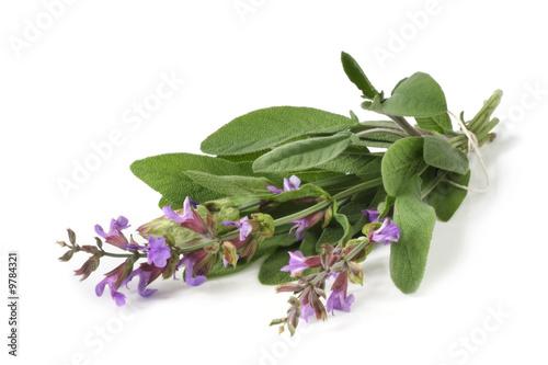 Fototapeta Fresh-picked bunch of flowering sage obraz