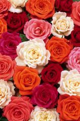 Fototapeta Róże lit de roses