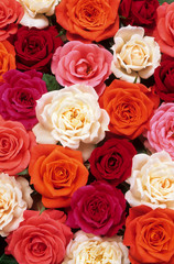 Panel Szklany Podświetlane Róże lit de roses