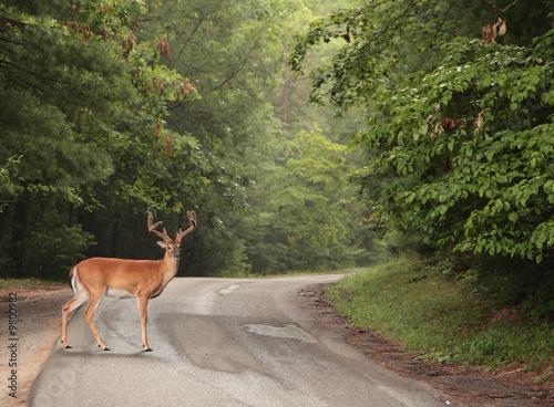 Aluminium Prints Deer buck red deer horny animal park staghorn