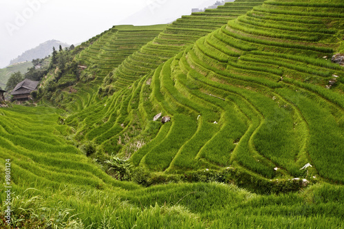 Poster Rijstvelden image of classic asian rice field background