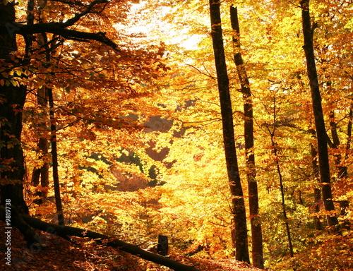 Foto op Plexiglas Oranje Autumn scene