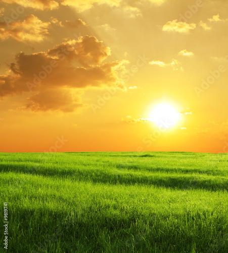 Poster Miel Autumn field