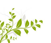 Vecteur Série - Arbre Au Printemps - Tree On Summer
