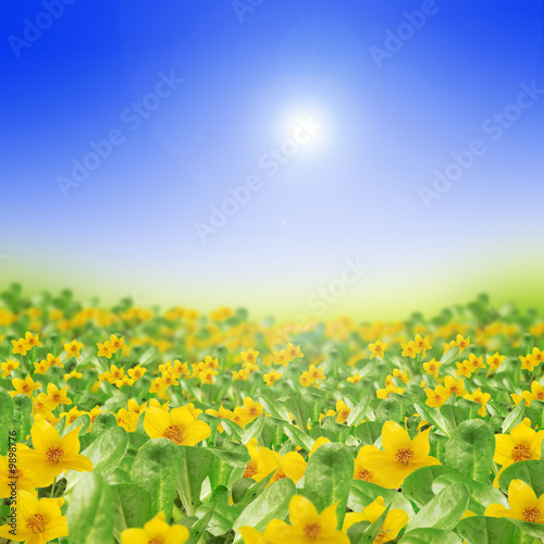 Foto-Banner - spring meadow full of yellow flowers