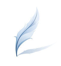 Feather Detailed Illustration