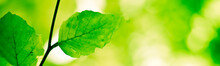 Banner Serie - Green Nature Background With Tree Branch