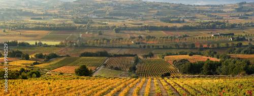 In de dag Toscane panoramique champ de vigne en automne
