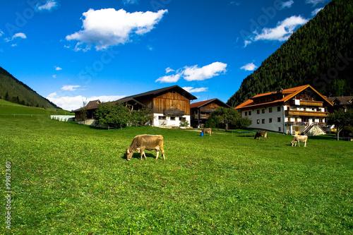 Foto  Kühe beim Bauernhof