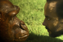 A Man And An Ape Facing Each Other