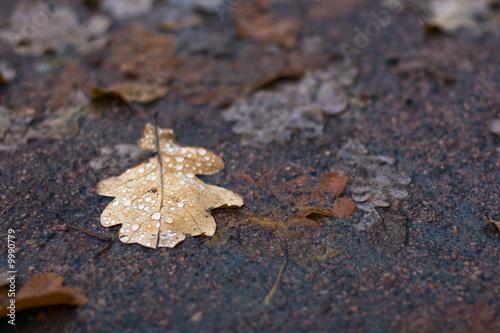 Staande foto Paardebloemen en water Brown autumnal leaf with drops of rain on damp ground.