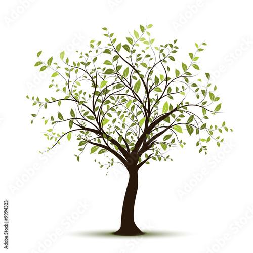 seria-vector-wektor-drzewo-biale-tlo-zielone-drzewo-na-bialym-tle