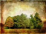 autumn forest -vintage picture