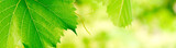 green foliage banner background with vivid colors