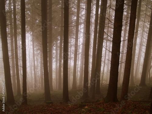 Foto auf Acrylglas Wald im Nebel magique