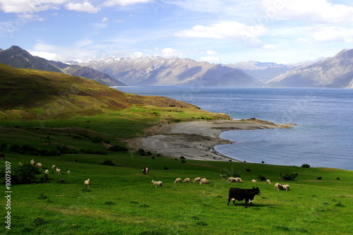 Deurstickers Nieuw Zeeland peaceful rural new zealand