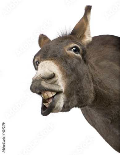 Deurstickers Ezel donkey ( 4 years) in front of a white background