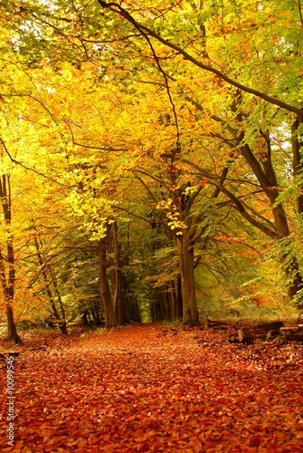 Papiers peints Orange forest in autumn