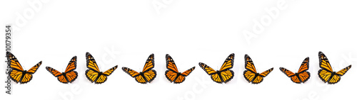 Monarch Butterfly Border on White Background