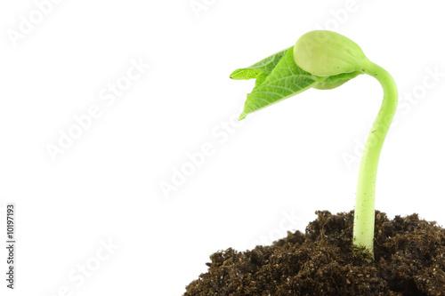 Fotografia  Plante qui pousse